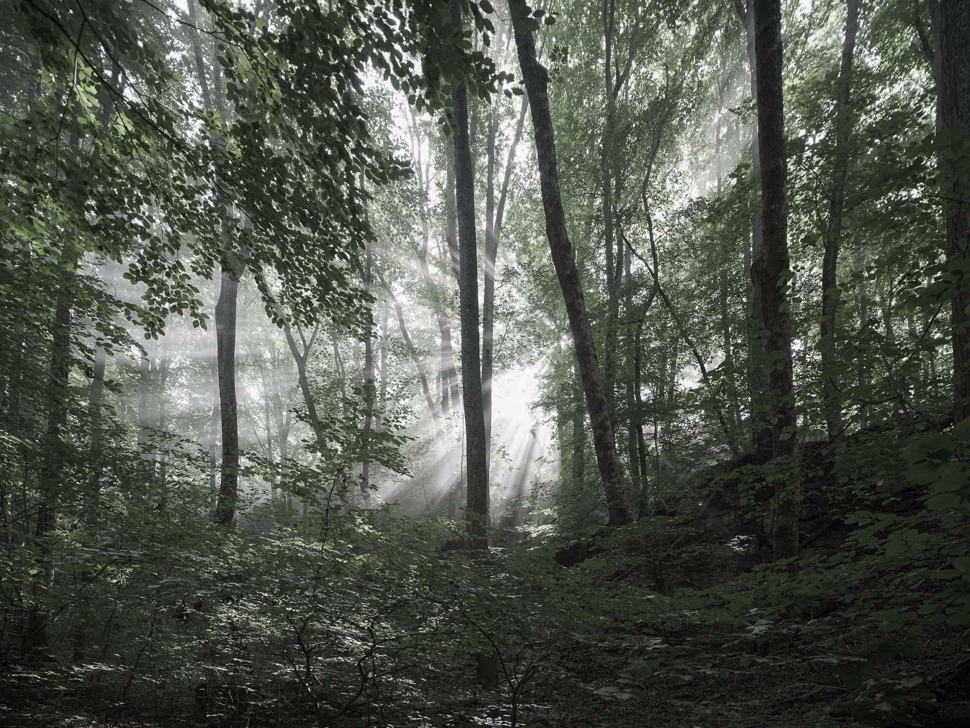 Herbstnebel im Biosphärenreservat