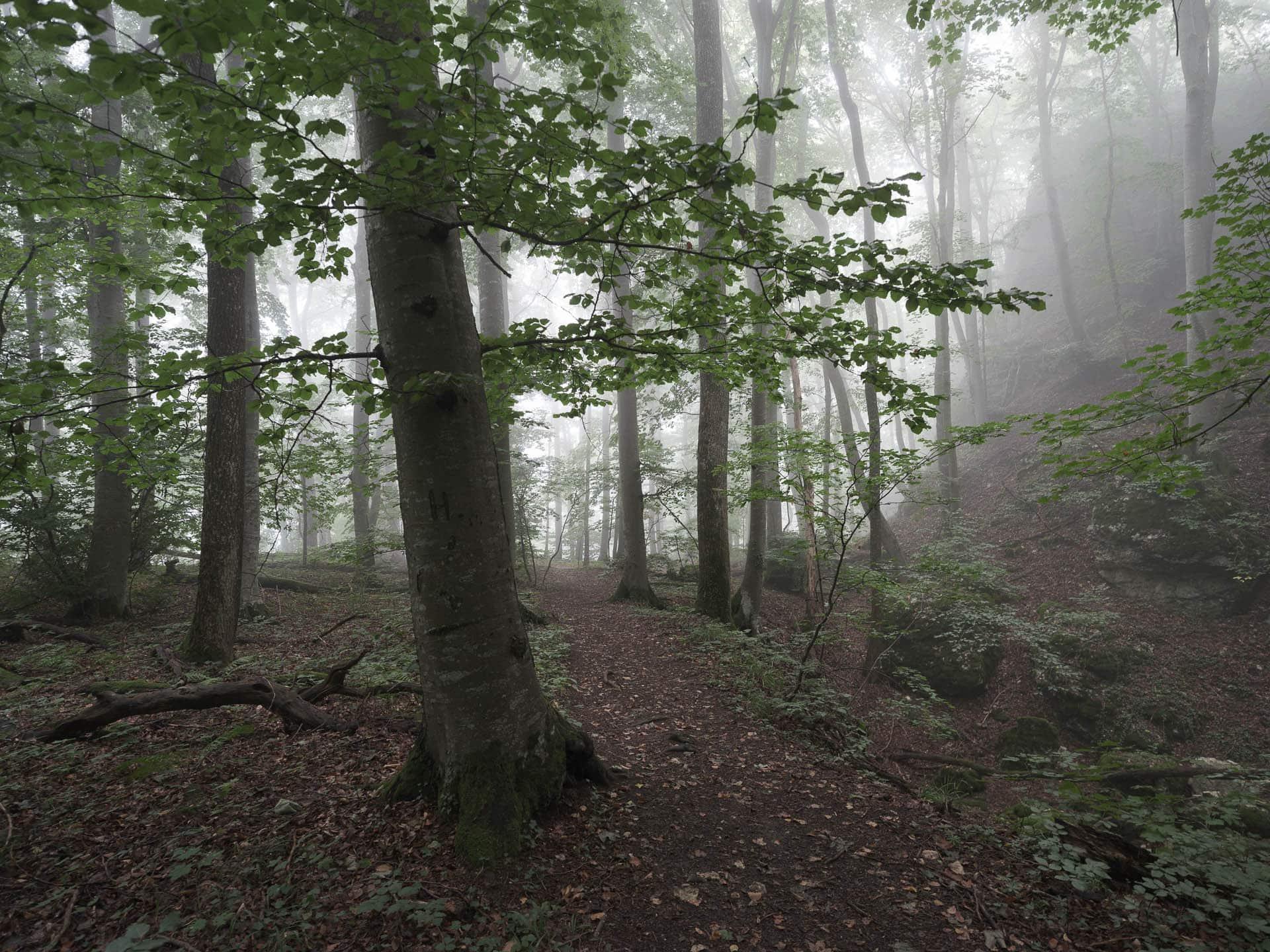 Herbstnebel im Biosphärenreservat Schwaebische Alb