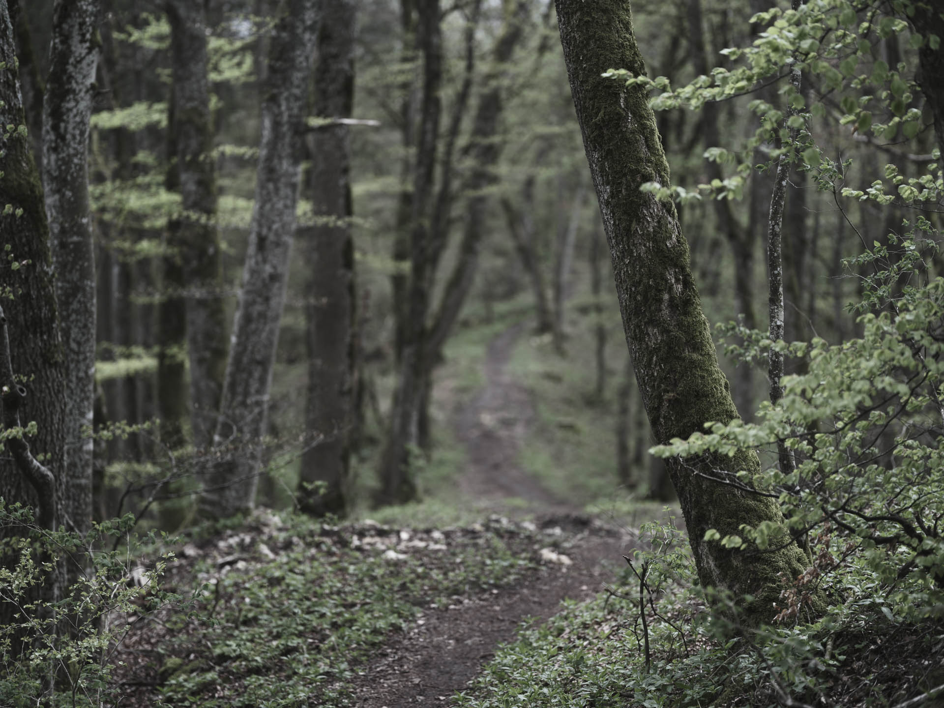 Fine Art Photography Dirk Wilhelmy: Im Wald / Into the Woods